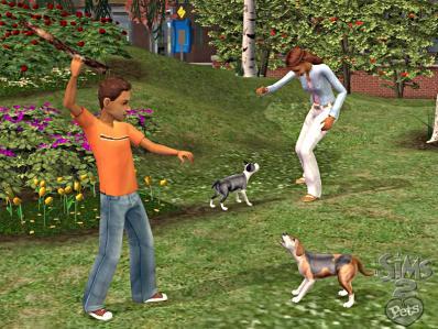 Lekker spelen met je hond!